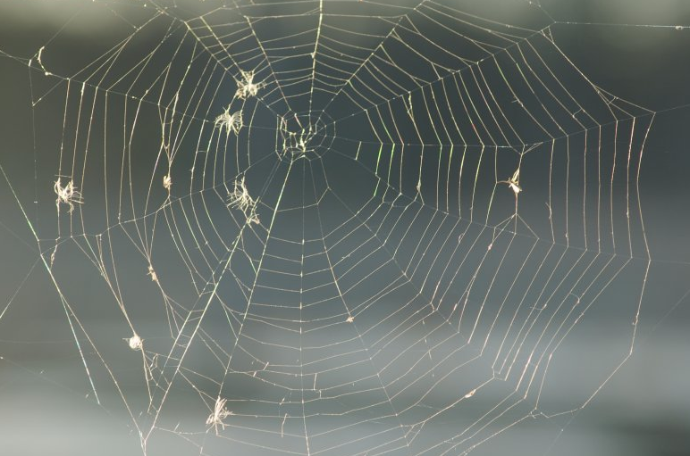 essays on fear of spiders My spider fear rises and falls according to how stressed i am, as though i'm  projecting my woes i hate everything about them: webs, legs,.