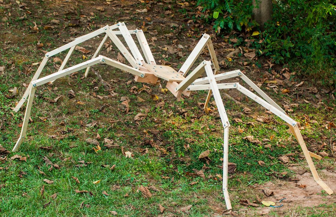 Wolf Spiders Arthropod Ecology