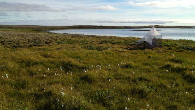 A malaise trap on the tundra - designed to collecting flying insects