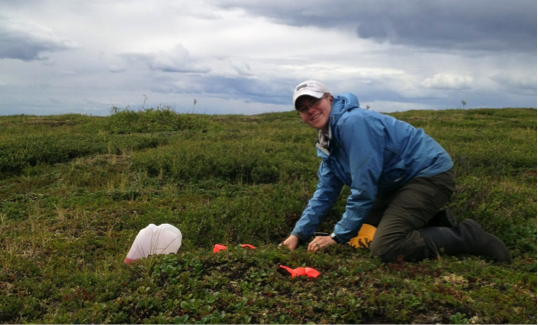PhD student Crystal Ernst installing pan traps along the Dempster Highway (Yukon)