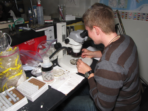 Sorting specimens back in the lab