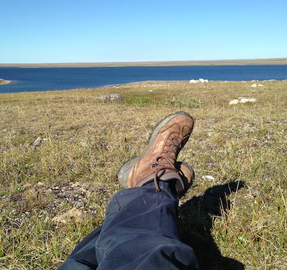 Lunch break on the tundra: an opportunity for natural history observations