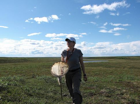 Crystal Ernst, on the tundra.