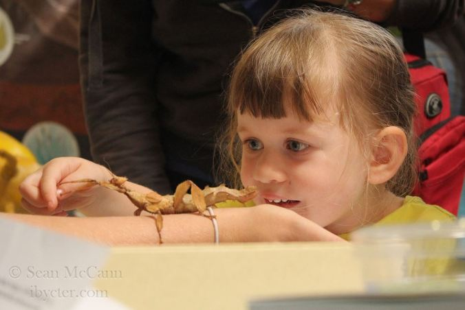 Bug shows: keeping kids exciting about arthropods. Photo by Sean McCann.