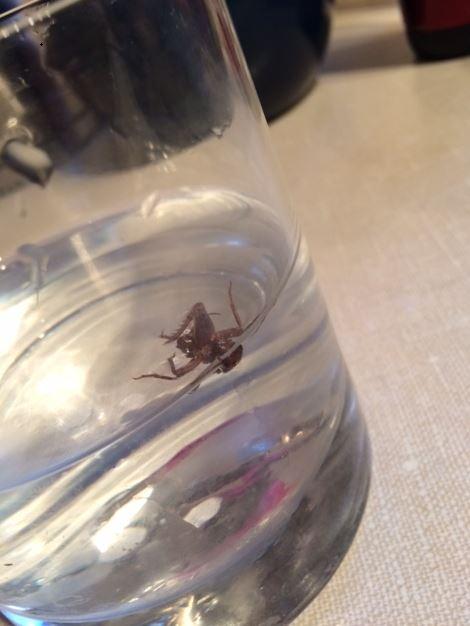 Crickets: Everywhere