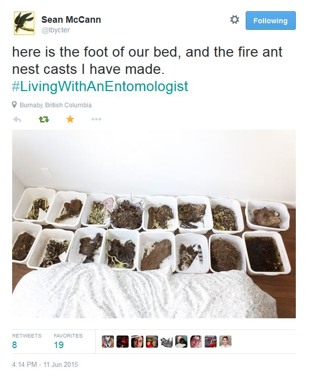 Fire ants at the foot of the bed. Oh my.