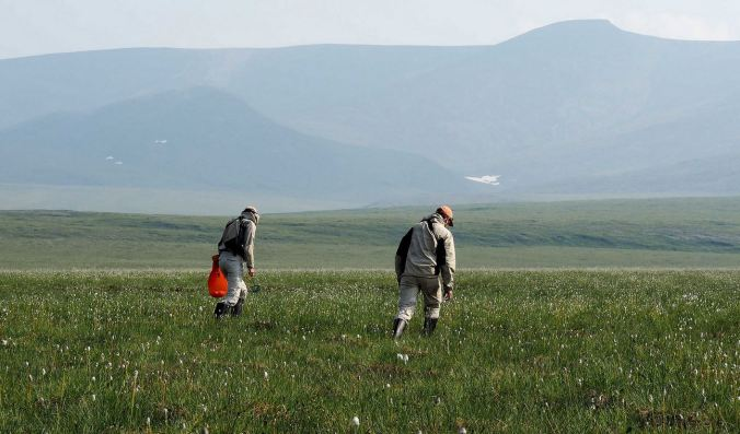 Searching for wolf spiders on the Tundra