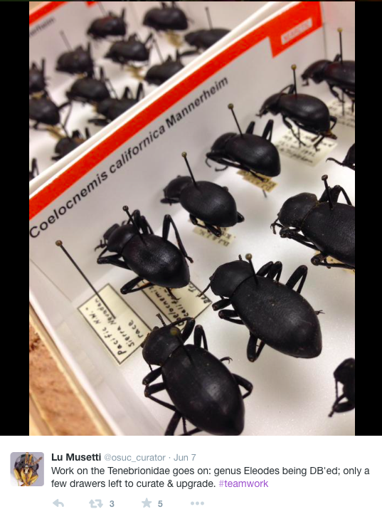 Beetles in drawers: a great example of specimens in a curated museum, and shows how such specimens can be used for all kind of research!