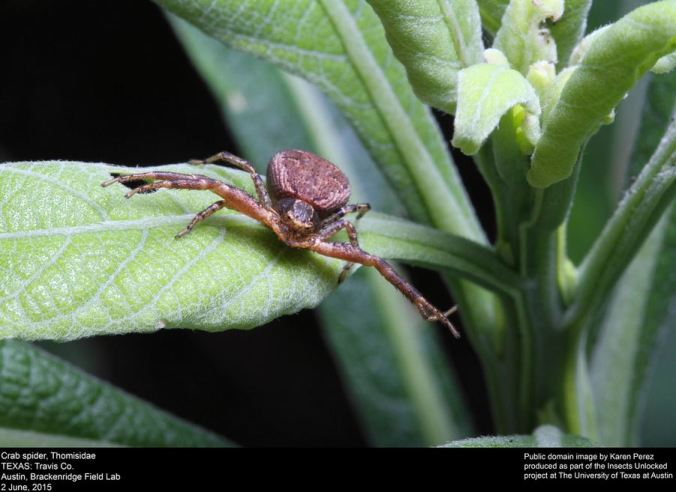 "A wonderful shot of a crab spider: part of the brilliant ""insects unlocked"" project."