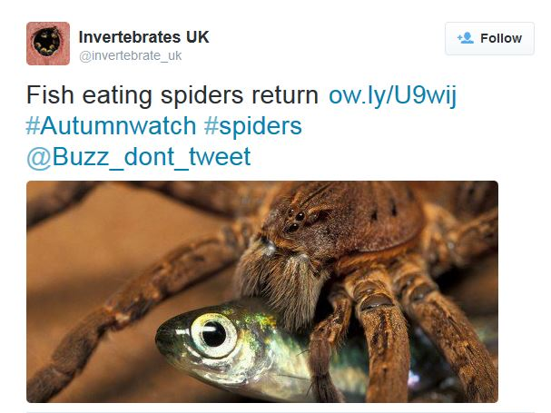 Fish-eating spiders. Oh, yeah!