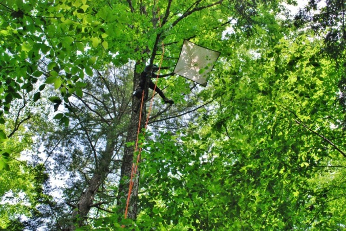 Using a beat-sheet in the tree canopy, to collect arthropods