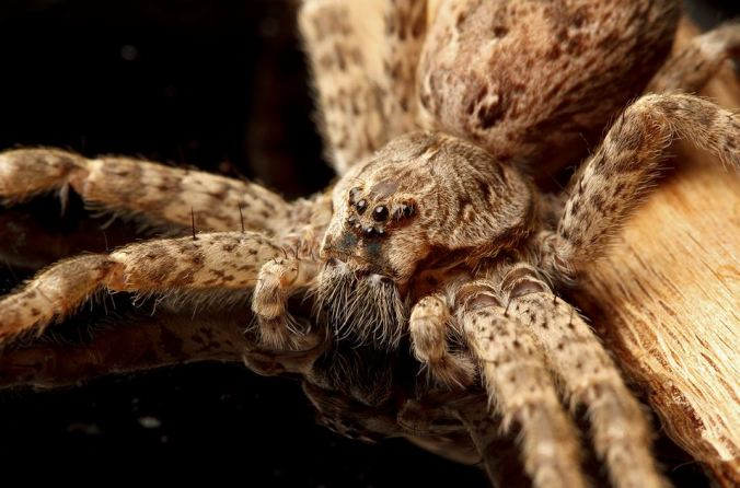 A beautiful dock spider (photo by Sean McCann)