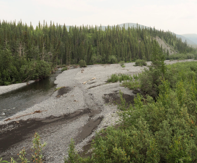 Sheep Creek, Yukon - a habitat that frequently floods: now we know how the tiny Arachnids survive the flooding!