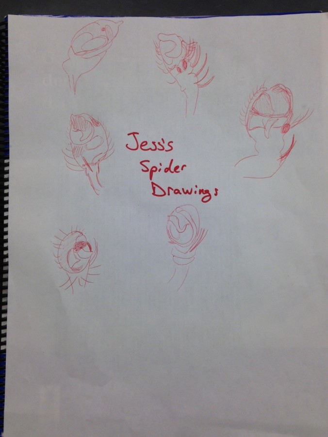 Learning Taxonomy... spider drawings (of male palps) help.