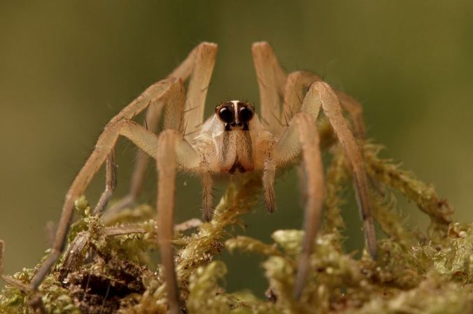A wolf spider. This photo by Sean McCann related to some daydreaming I've been doing, about collecting spiders.